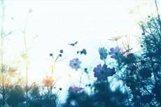 flower612-2