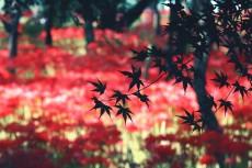 flower614-2