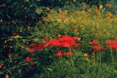 flower615-2