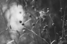 flower616-3