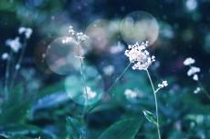 flower617