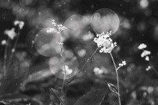 flower617-3