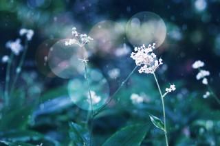 【高解像度】光の中の薮茗荷(ヤブミョウガ)(3パターン)