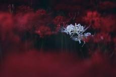 flower618-2