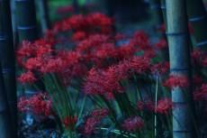 flower619