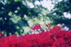 flower621