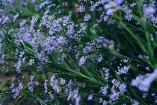 flower622-2