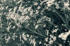 flower622-3