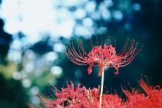 flower623-2