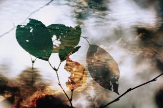 【高解像度】虫食いの葉と空(3パターン)