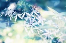 flower625-2