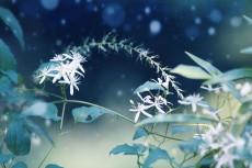 flower626