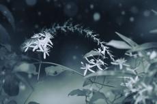flower626-3