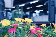 flower627