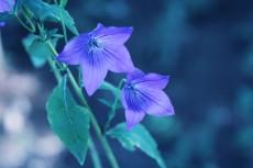 flower628