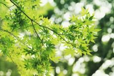 flower630-2