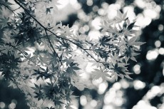 flower630-3