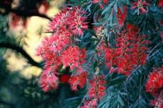 flower631-2