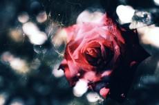 flower635
