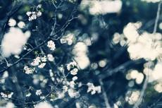flower636-2