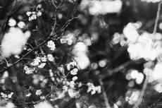 flower636-3