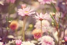 flower637-2