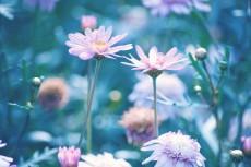 flower637