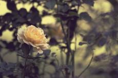 flower638-2