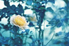 flower638