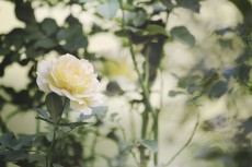flower638-3