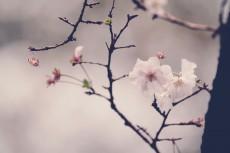 flower639-2