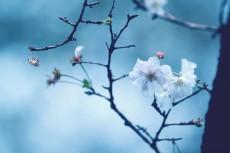 flower639