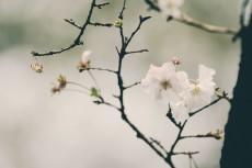 flower639-3