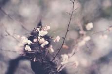 flower640-2