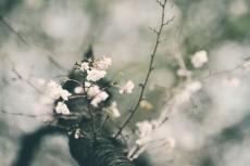 flower640-3