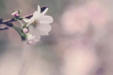flower642-2