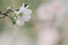 flower642-3