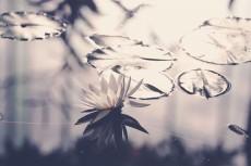 flower643-2