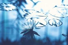 flower643