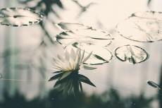 flower643-3