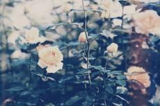 flower645-2