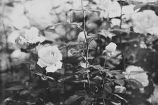 flower645-3