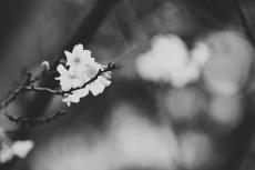 flower646-3