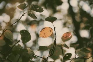 【高解像度】緑と黄色の葉(3パターン)