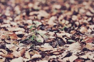 【高解像度】落ち葉の中から伸びる芽(3パターン)