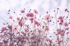 flower651-2