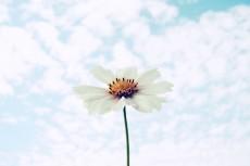 flower652-2