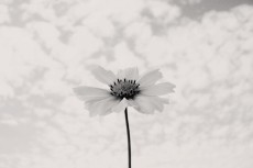 flower652-3