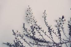 flower654-2