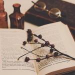 【高解像度】実のなる枝と洋古書(3パターン)